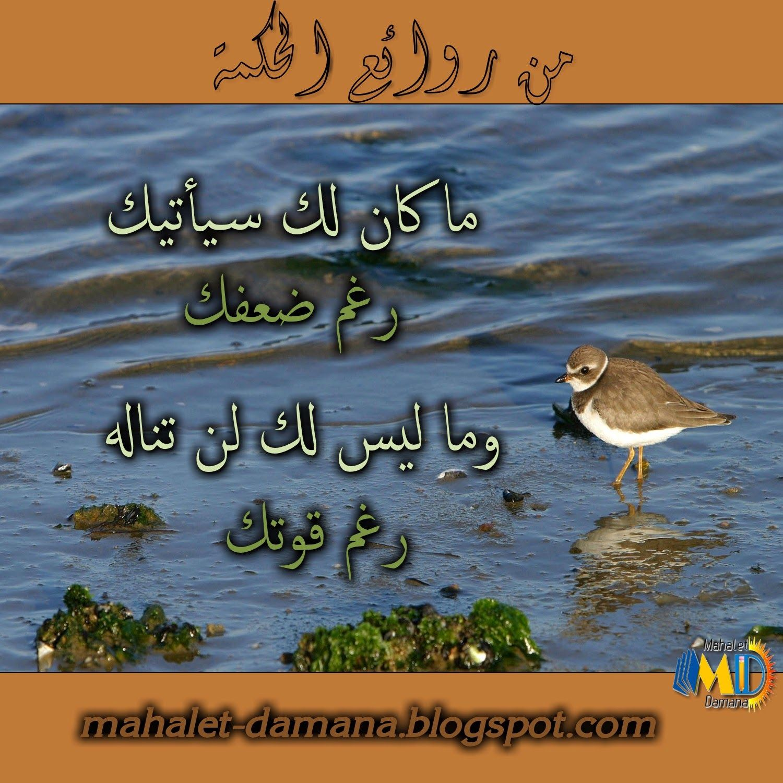 Mahalet Damana من روائع الحكمة Blog Posts Blog Novelty Sign