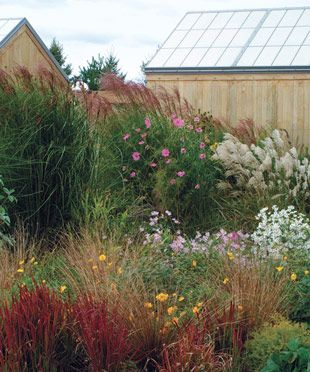 Designing With Grasses Finegardening Ornamental Grasses Garden Shrubs Grasses Garden