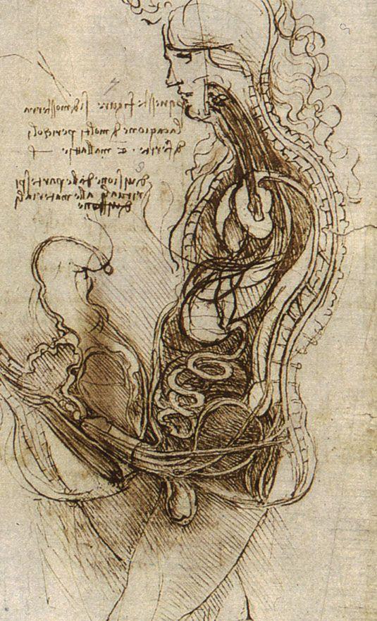 Dibujos De Leonardo Da Vinci Parte 1 Drawings Woman And Anatomy