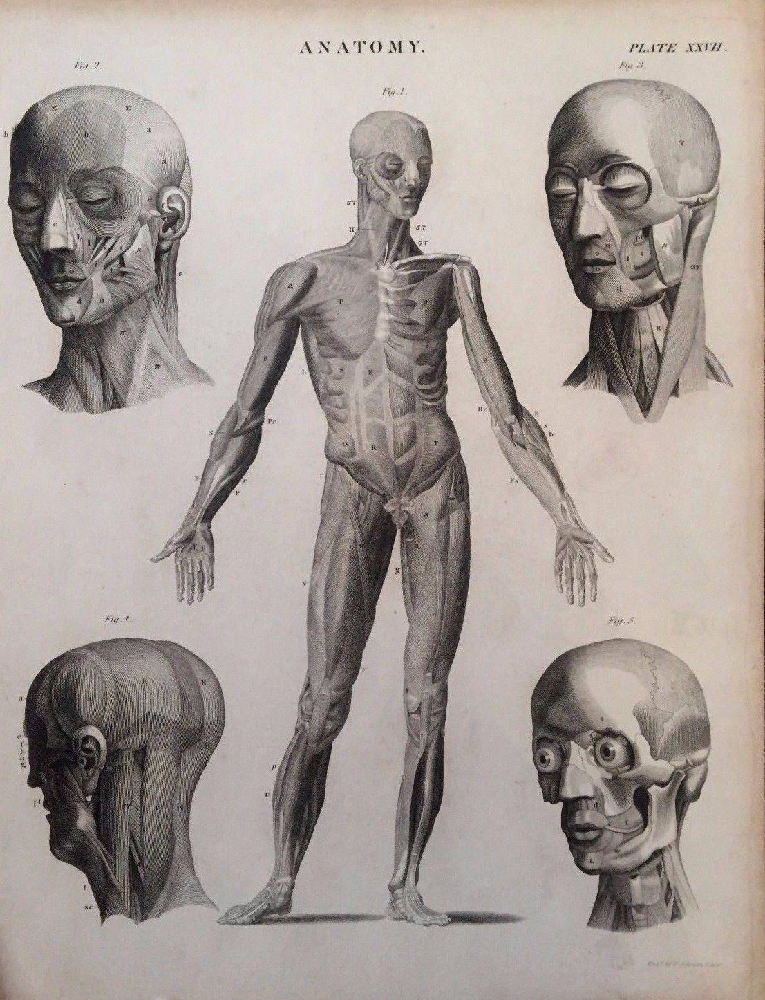 19TH Century anatomía grabados por G Aikman C.1860   eBay ...