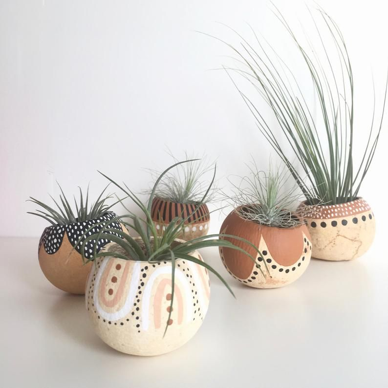 Photo of Air Plant Pod Holder with Air Plant. Tan, Black Brown Tribal…