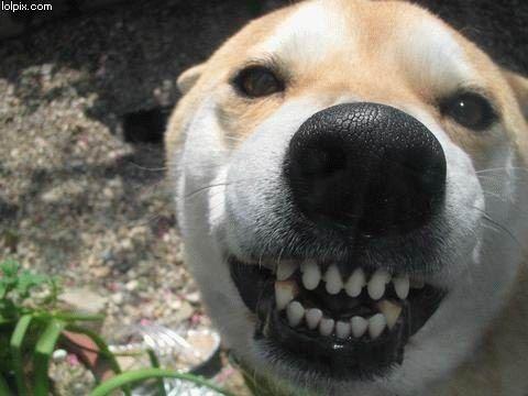 Funny Meme Smiley : Dog smiling smiley doggies pinterest dog doggies and animal