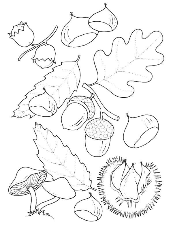 Página para colorear hojas y frutos de otoño | Bichos no outono ...