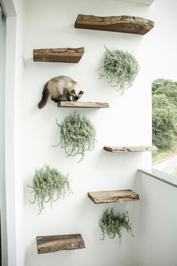 Photo of 30 Modern DIY Cat Playground Ideas In Your Interior