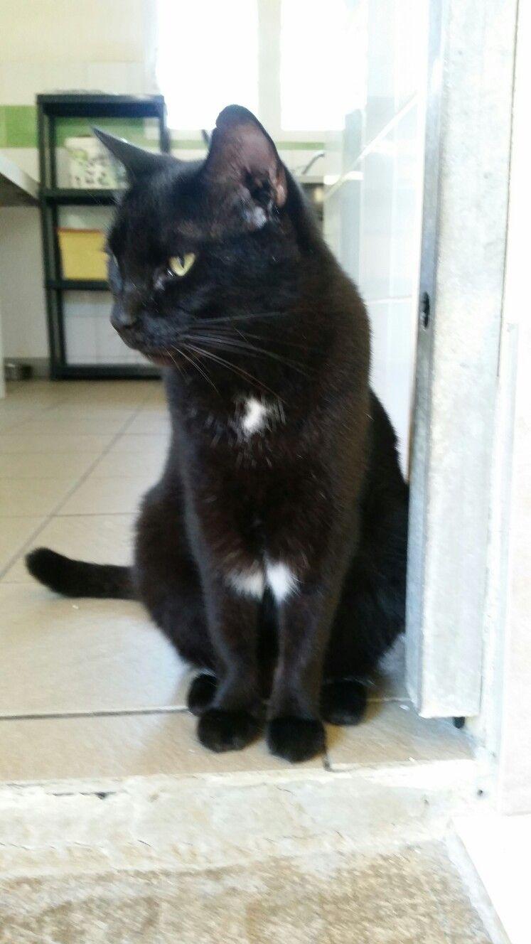 Beautiful Black Cat Crazy Cats Black Cat Cats
