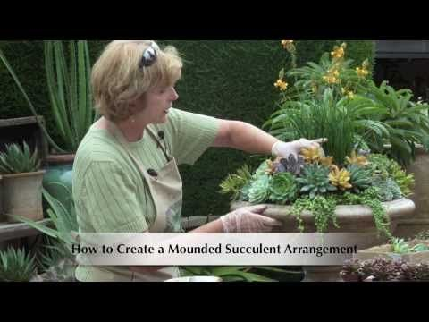 How To Make A Mounded Succulent Arrangement Youtube