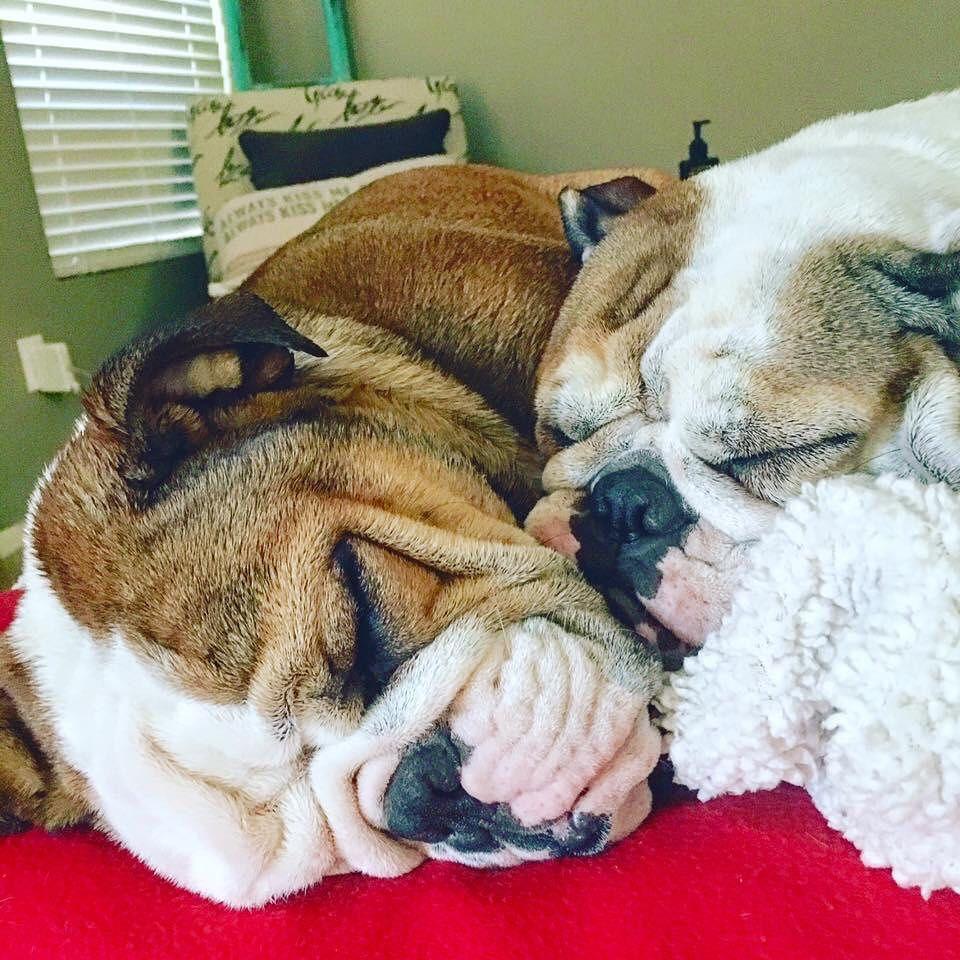 Mother Of Bulldogs Karen On Instagram Happy Saturday Snuggles