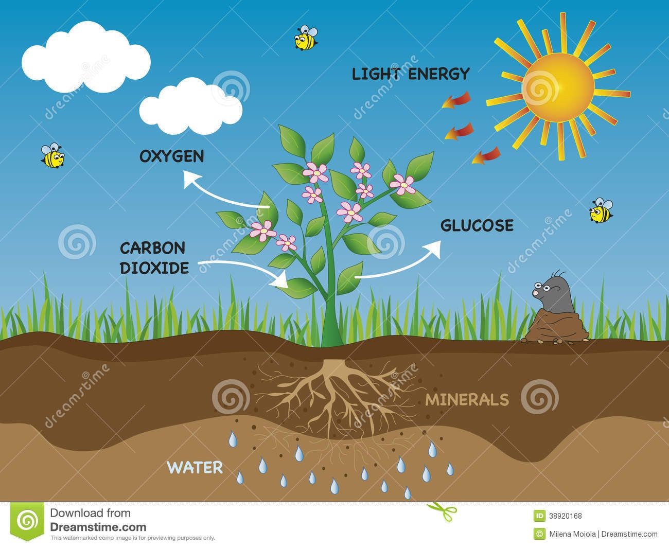 Photosynthesis Is The Process In Which Plants Use The Sun