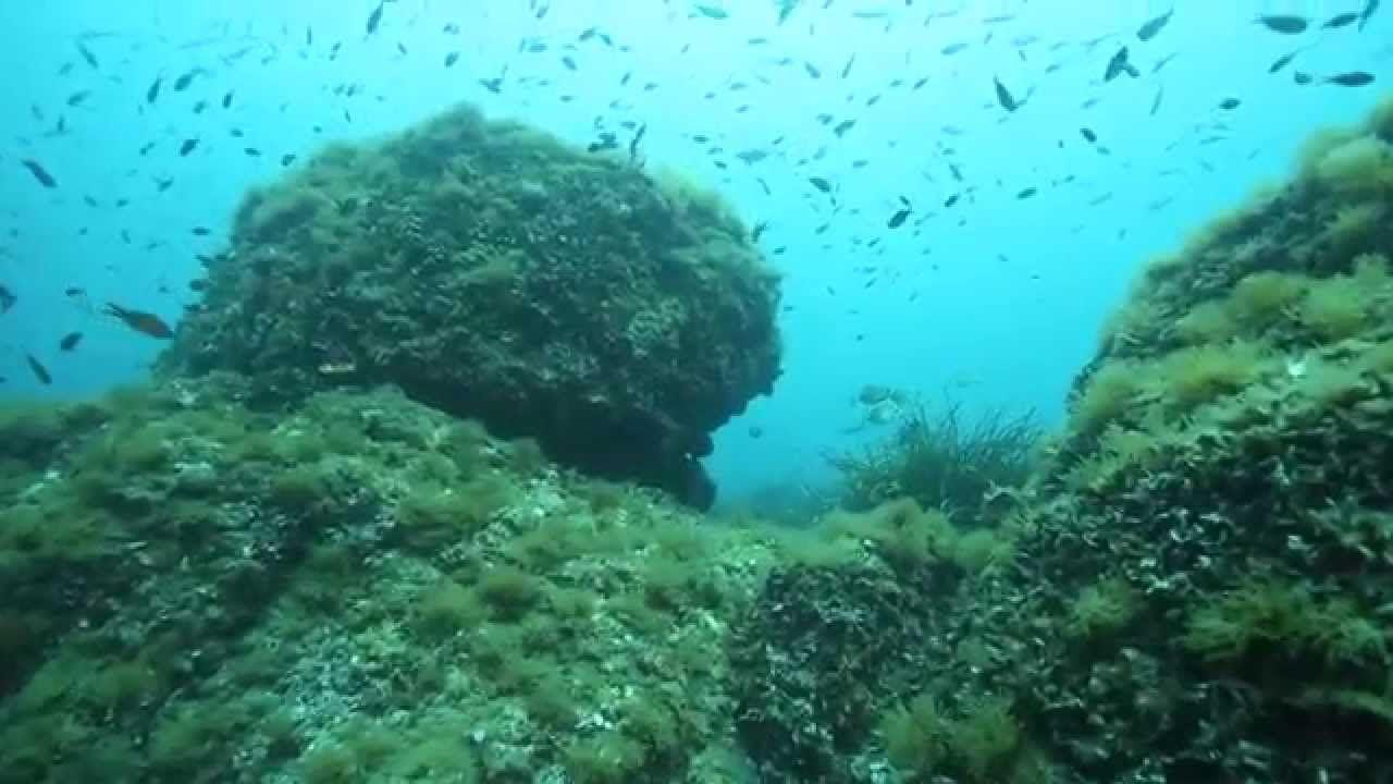 Les fonds marins de Cannes : ce que l'on vous cache réellement.