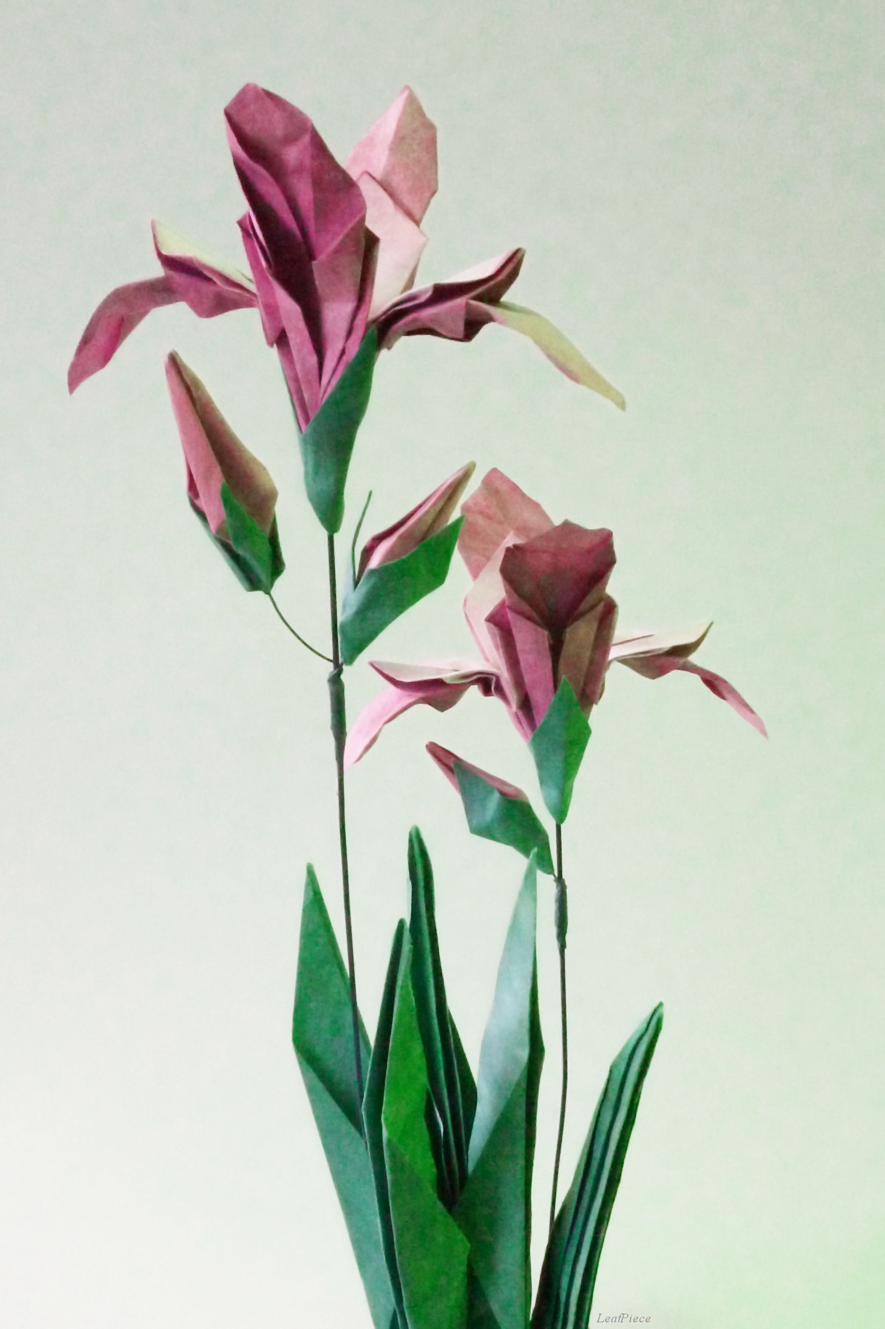 Gallery origami scrapbooking and craft gallery wild irisorigami flowerspaper izmirmasajfo