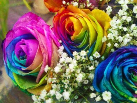 Rainbow roses rainbow color rose blue purple pink for Rainbow rose wallpaper