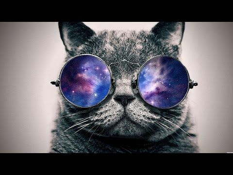 Top 5 Non Copyrighted Dubstep Songs 2014 Free Downloads Glasses Wallpaper Hipster Cat Cat Glasses