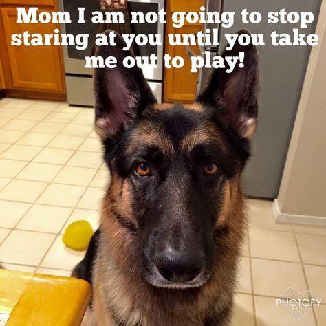 Read Message Wi Rr Com German Shepherd Dogs Shepherd Dog Bad Dog