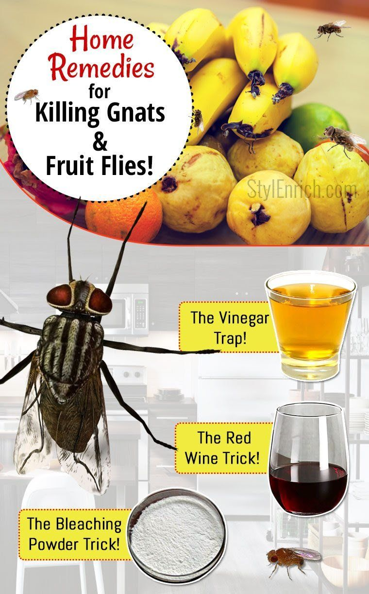 How to Get Rid of Gnats and Fruit Flies starting over Pinterest