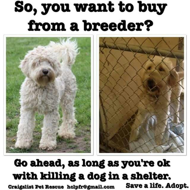 Adopt Don T Shop Purebred Dogs Craigslist Pets Dog Adoption