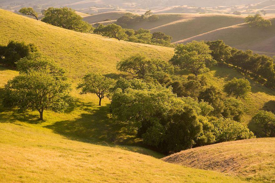 oak trees and rolling hills, Santa Ynez Valley, California | California photos, Santa ynez valley, Landscape trees