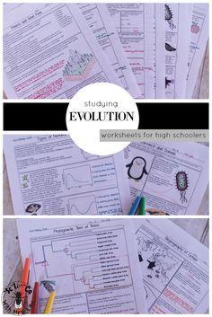 Evolution Unit Homework Pages Pinterest Phylogenetic Tree High