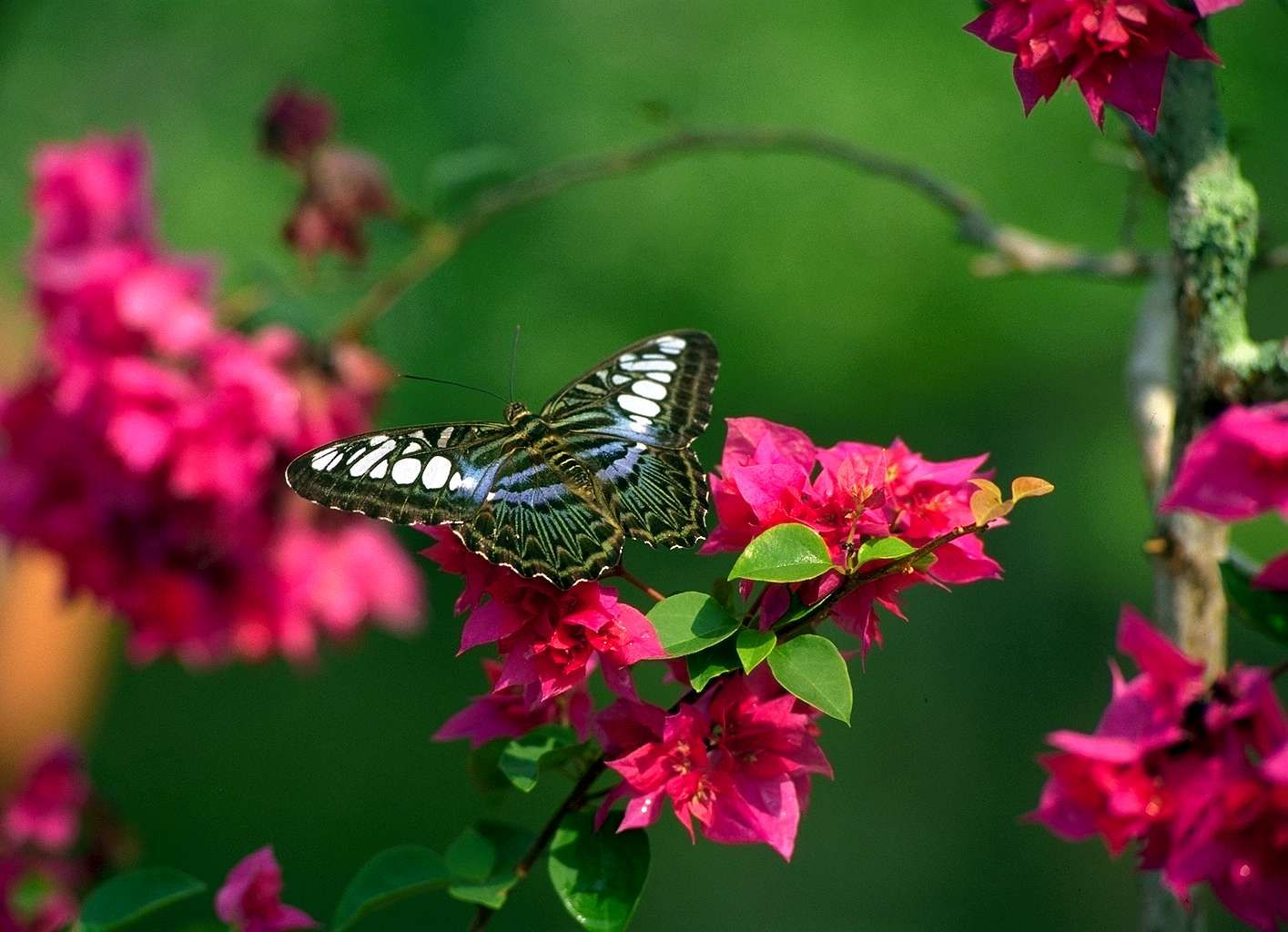 Flowers Butterfly Natural Beauty Desktop Wallpapers Nature