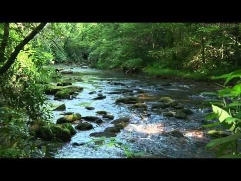 2 Hours of Nature Meditation Sounds. Water & Animals - 2 horas de Meditación en la Naturaleza - YouTube