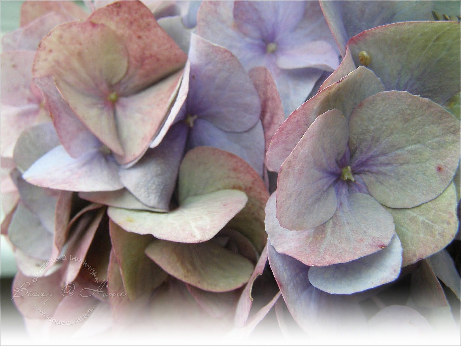 Hydrangea color wheel tones dusty and muted faded - Jewel tones color wheel ...