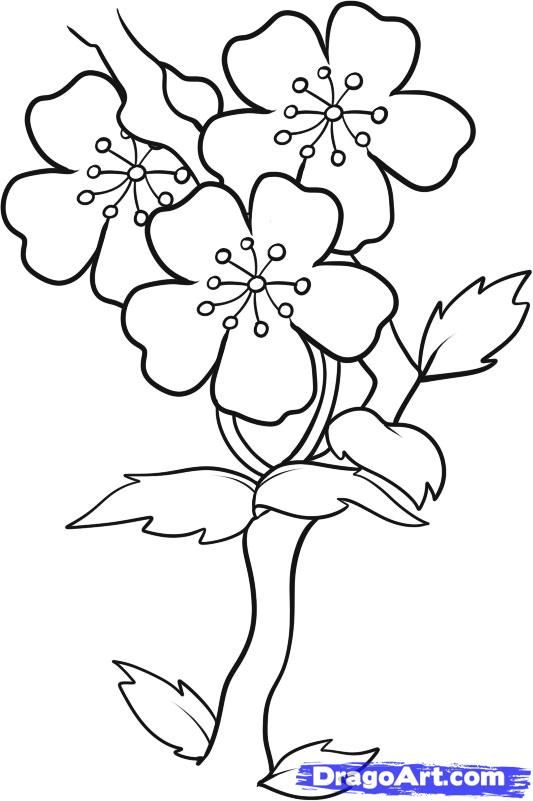 Easy To Draw Cherry Blossoms How To Draw Blossoms Step 7 Flower Drawing Flower Art Painting Cherry Blossom Drawing
