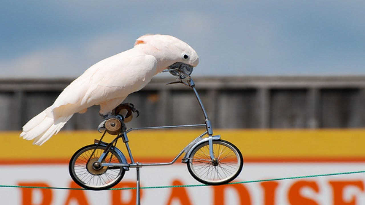 Smart Parrot Riding Bike