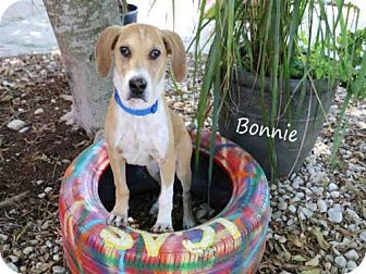 Pin By Dee Zaninelli On Animals Up For Adoption Beagle Mix Pets