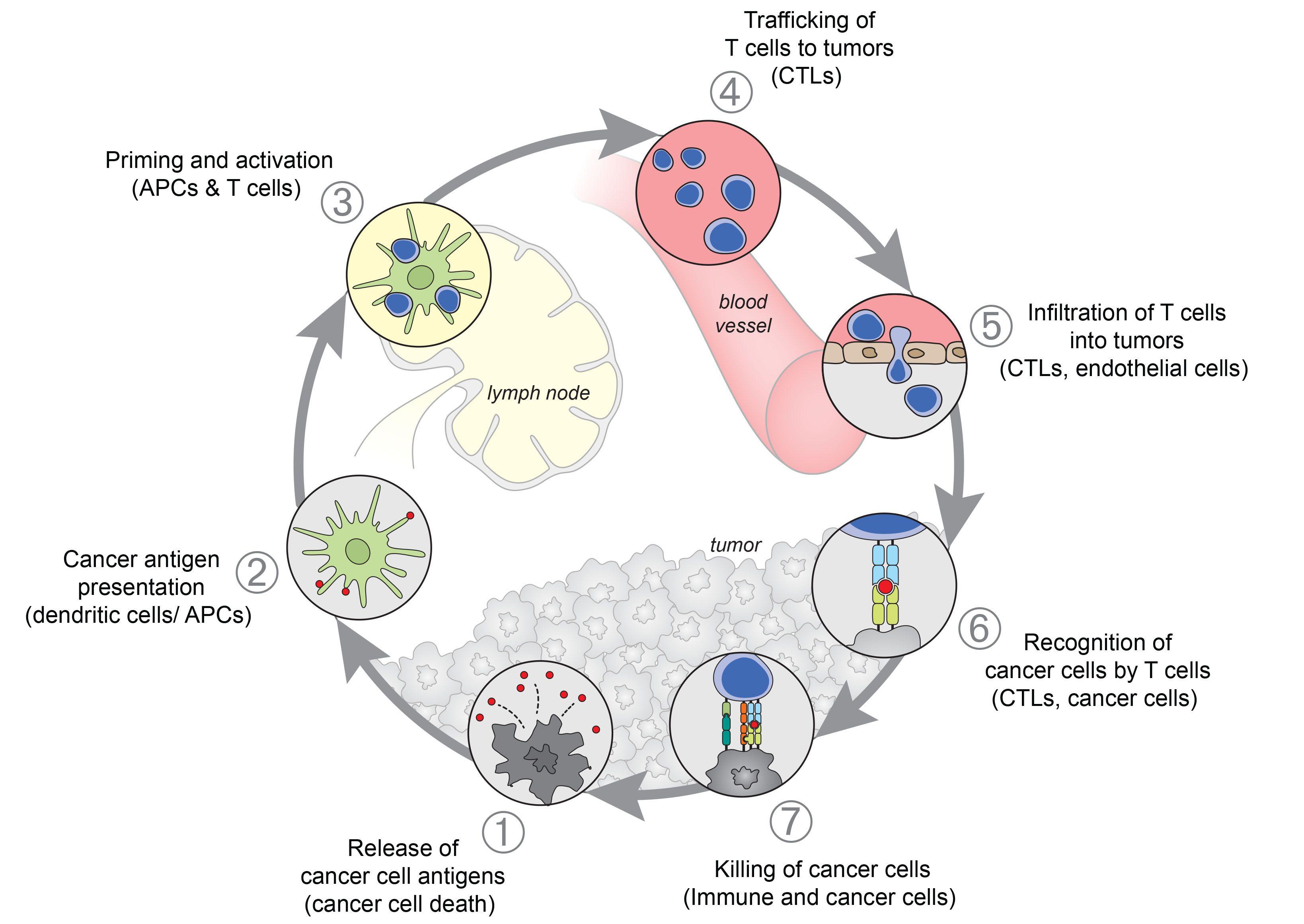 Pin von Daniel Chen auf Cancer, Immunotherapy and PD-L1 | Pinterest