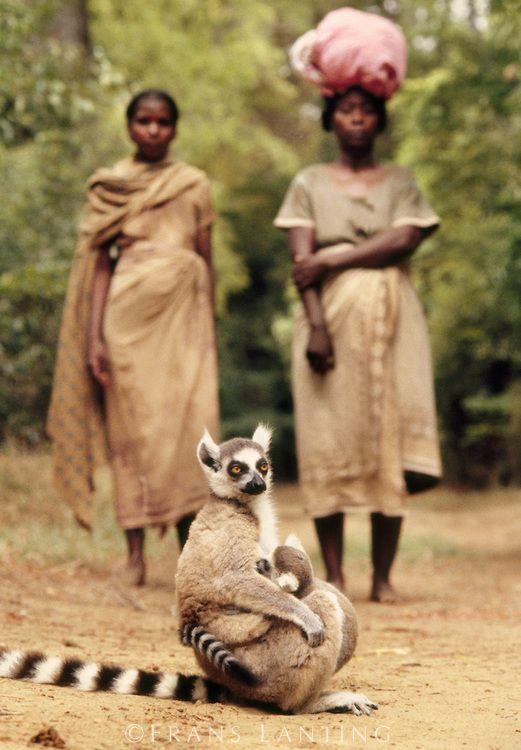 Antandroy women watching ring-tailed lemurs, Lemur catta, Berenty Reserve, Madagascar