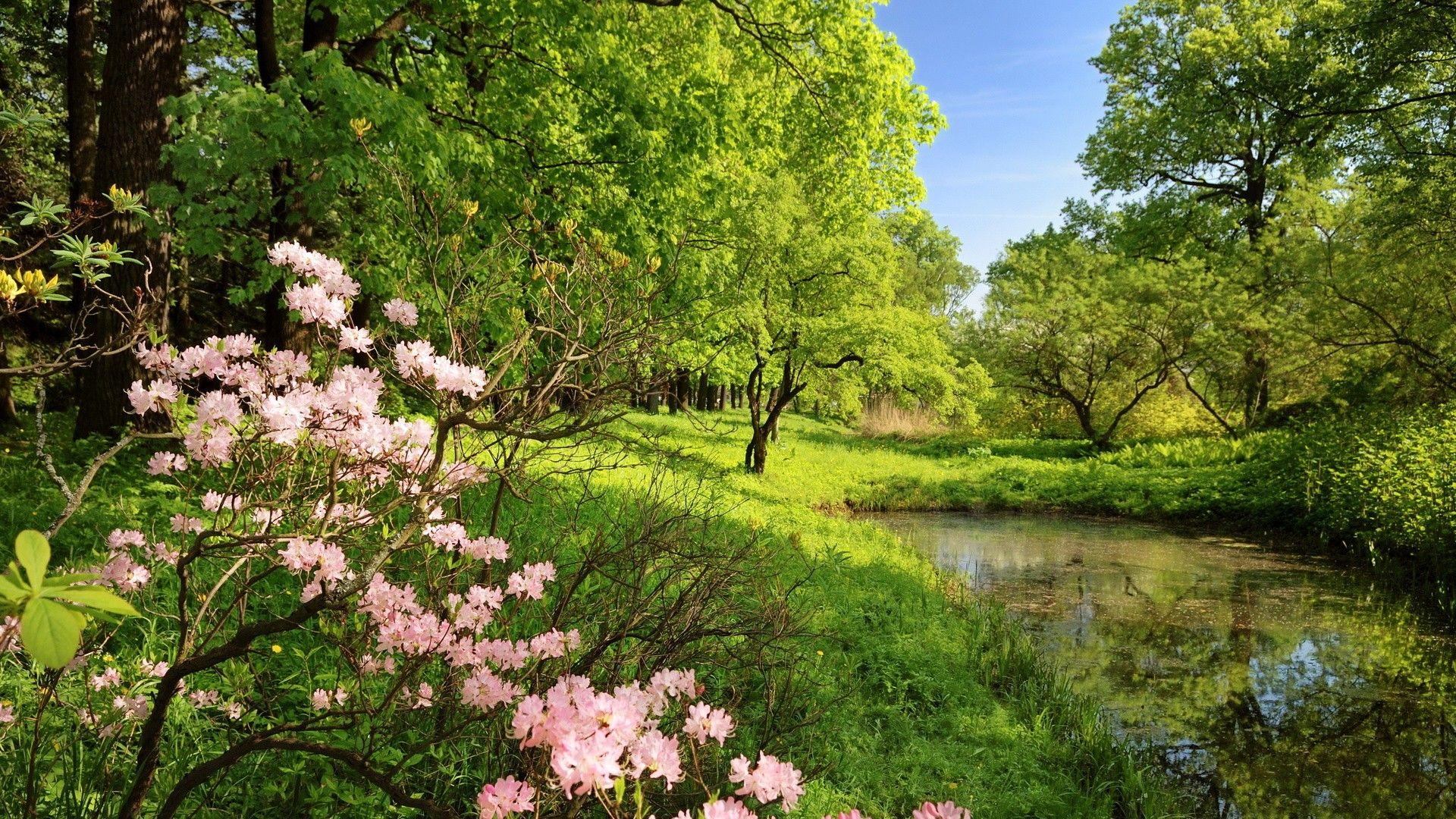 Landscapes Nature Trees Pond Flowers Spring Landscape Spring Wallpaper Wall Murals
