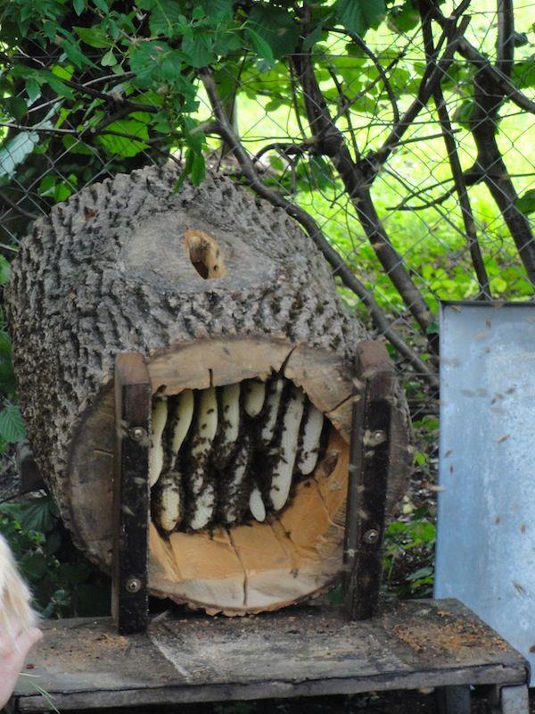 Pin By Zana Z Lesa On Včelky Bienenhaltung Bienen Imker