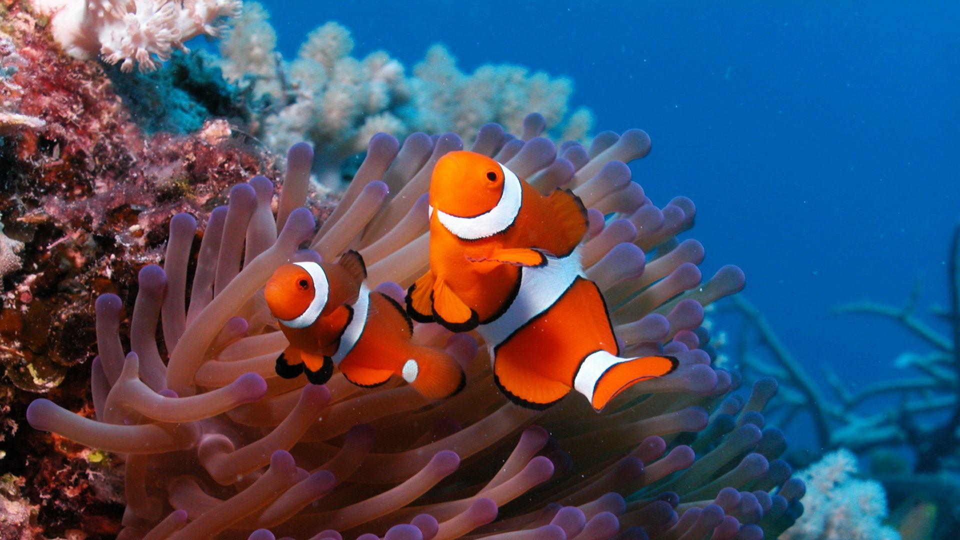 Underwater World HD Wallpapers 1600×1200 Wallpapers Underwater (36 Wallpapers) | Adorable ...