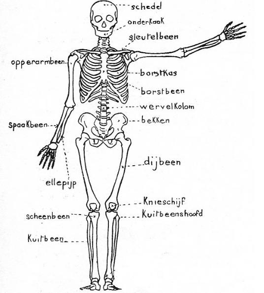 skelet biologie hoofdstuk voortplanting