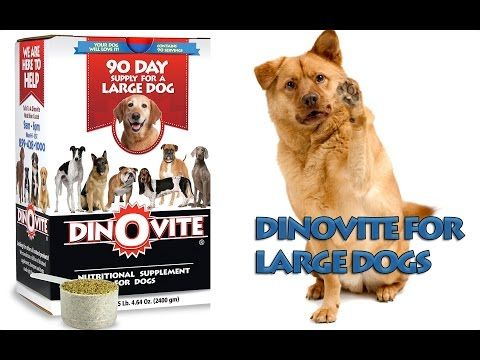 Dinovite For Large Dogs Dogs Healthy Dog Food Recipes