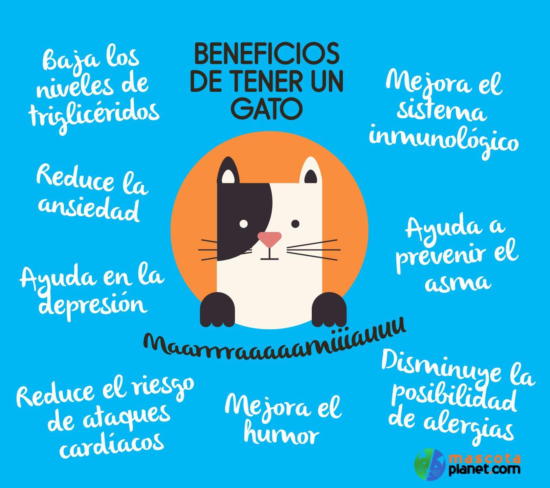 Todo es amor y buenos ratos con nuestros gatos. Pero, ¿que más nos aportan? Aquí os dejamos algunos de los beneficios principales de nuestros mininos, ¿cuál mas añadirías?