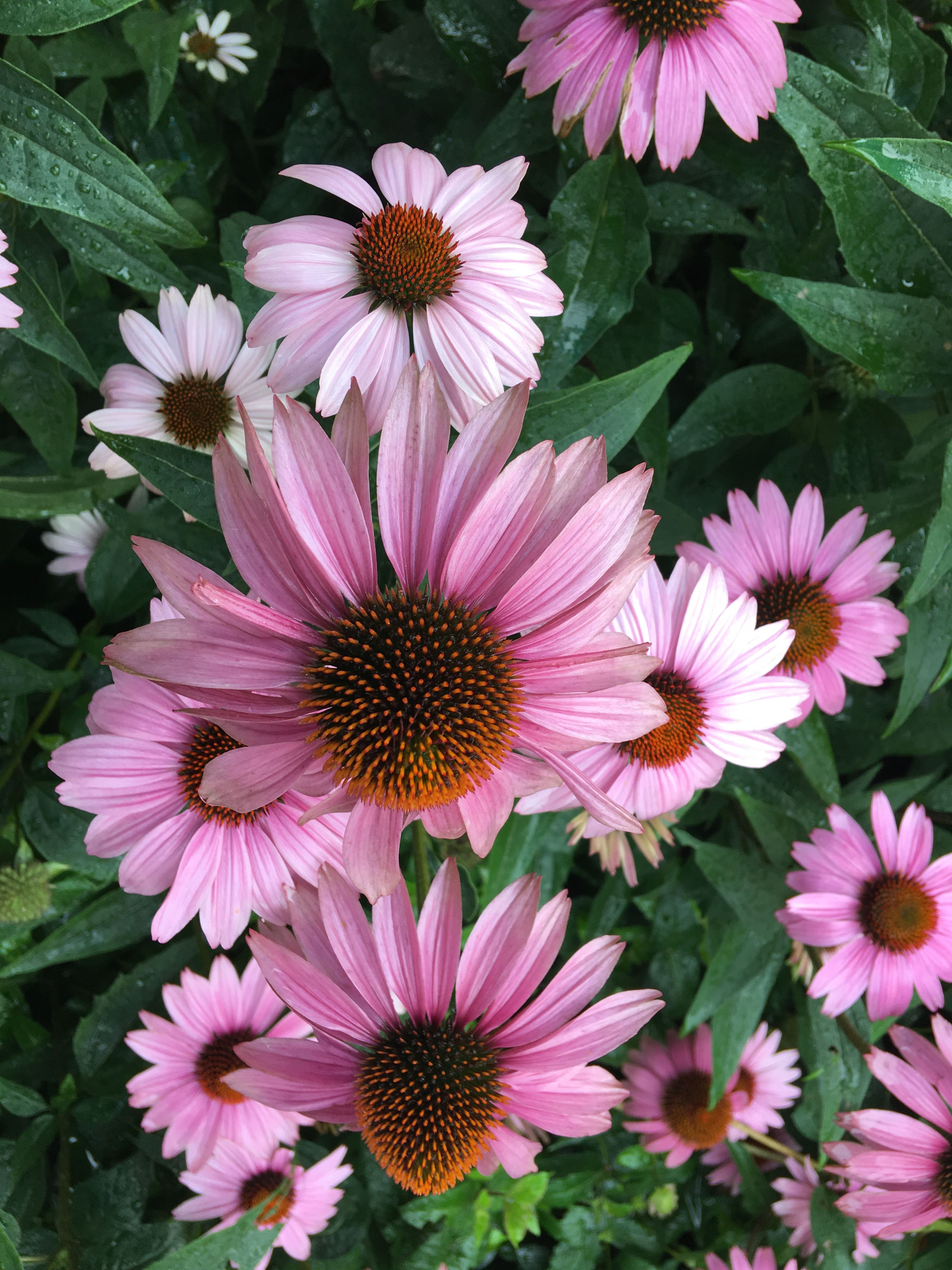 Pin by brianna rentas on flowers pinterest
