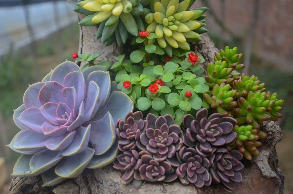 Are Coffee Grounds Good For Succulents Succulents Plants Planting Succulents