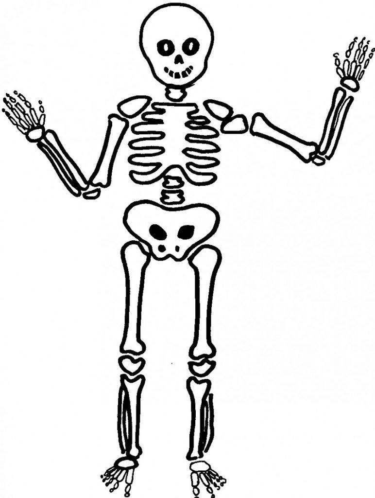 Dibujos De Esqueletos Tutorial Dibujar Un Esqueleto Humano Esqueleto Dibujo Dibujo Del Esqueleto Humano Esqueleto Humano