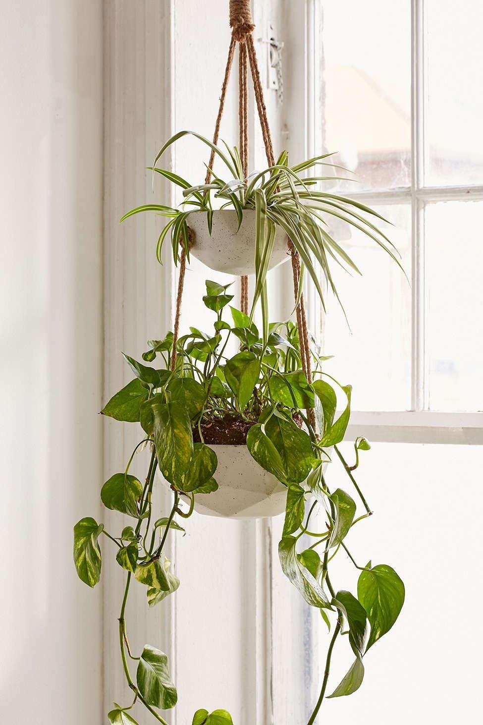 Ellis Double Hanging Planter | Planters, Urban and Indoor