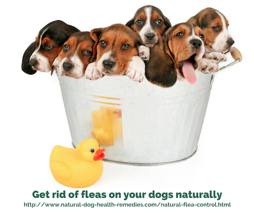 Puppies in a Tub Oils for dogs, Essential oils dogs