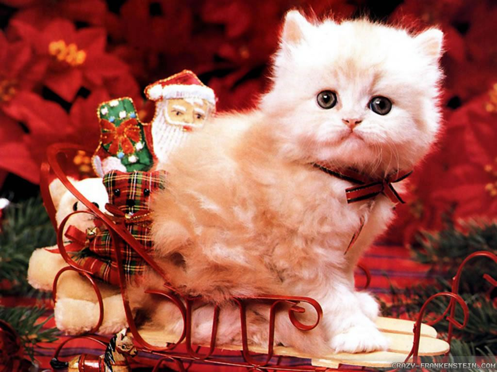 free christmas cats wallpaper collection to decorate your desktops