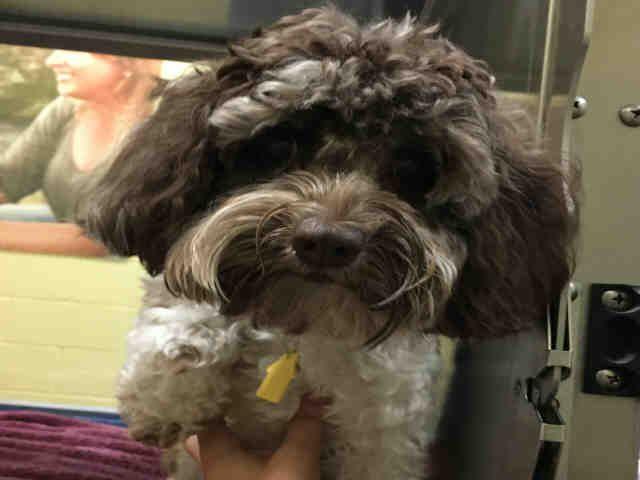 St Louis Pet Adoption With Images Humane Society Adoption Dog Adoption