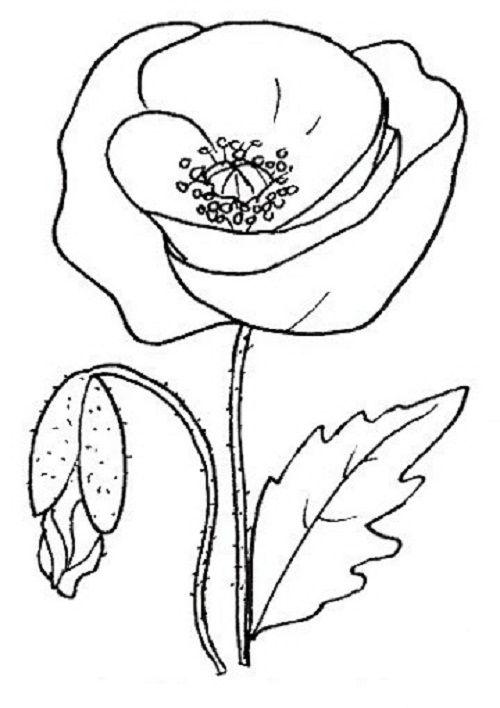 Ausmalbilder Blumen 14 Kostenlose Ausmalbilder Zeichnung Kostenlose Ausmalbilder Ausmalbilder Muster Malvorlagen