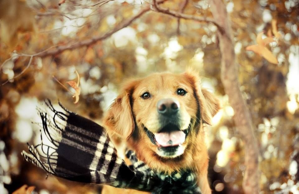 Image result for AUTUMN DOGS funny