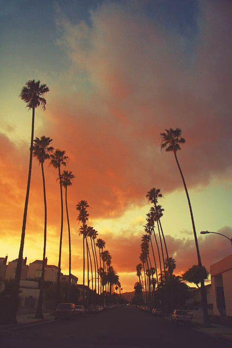 Sign Up Tumblr Los Angeles Wallpaper Sunset Surfing