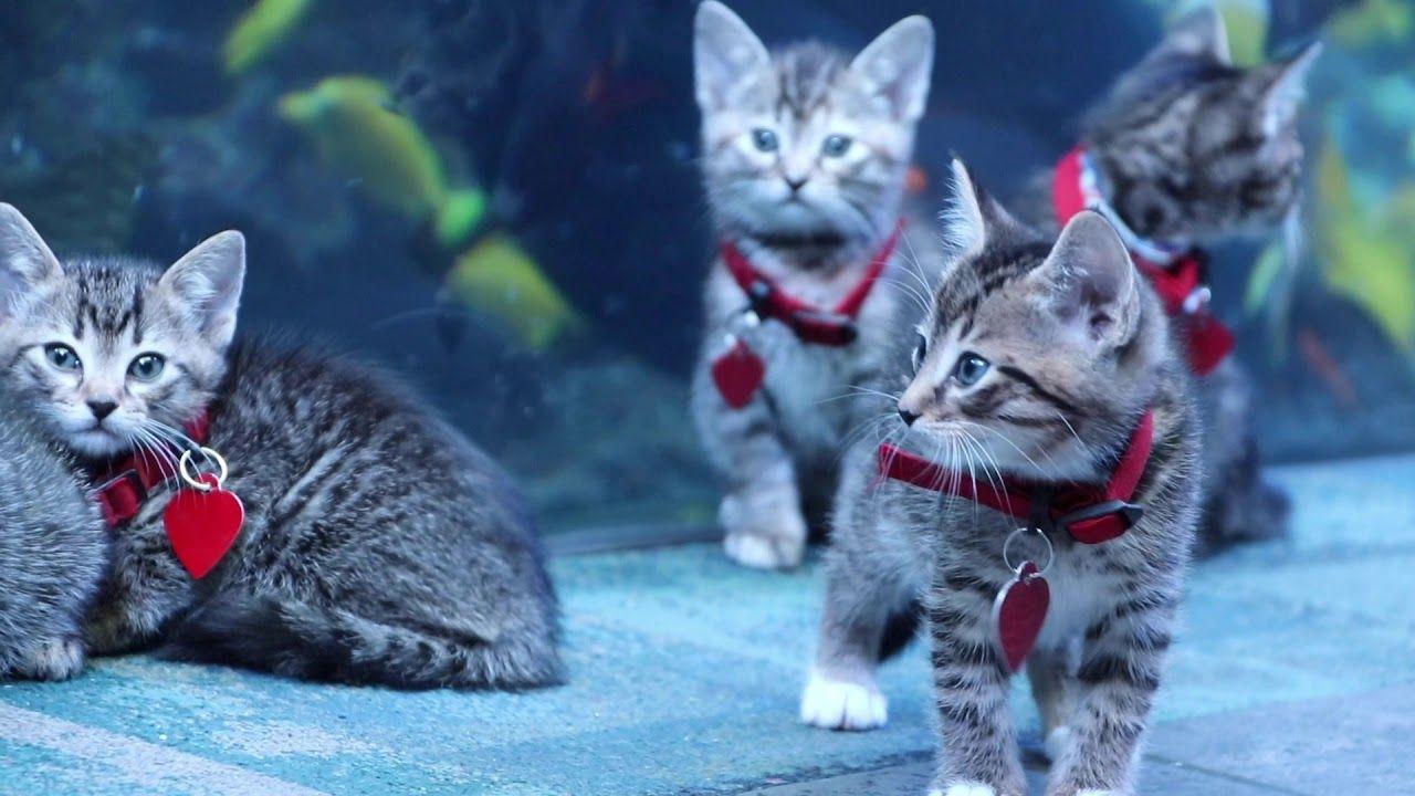So Cute Atlanta Humane Society Kittens Explore The Georgia Aquarium Youtube