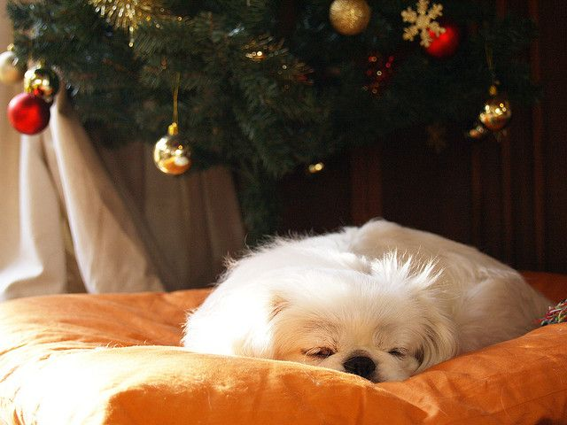 under the christmas tree by picacch, via Flickr