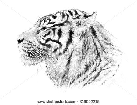 tiger illustration, hand drawn sketch of tiger head