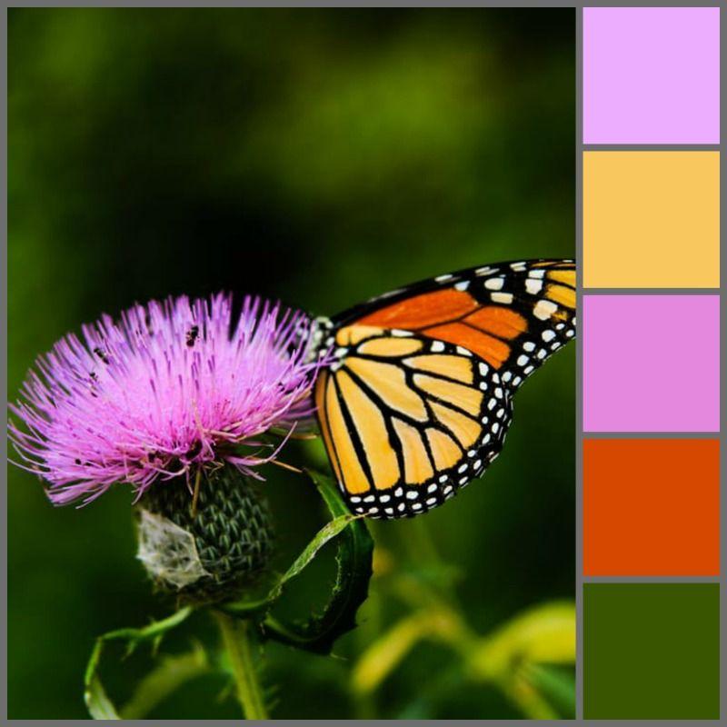 Colour Palette Plants that attract butterflies, Wayne