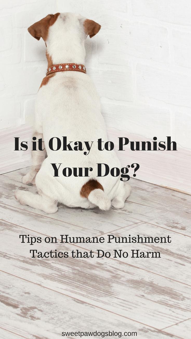 Is it Okay to Punish Your Dog? | Dog Training | Dog care ...